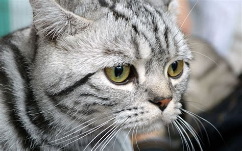 names for grey cats cute cats
