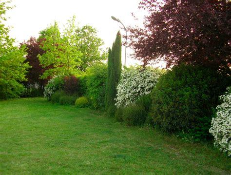 piante da cortile viburnum tinus siepe cerca con shrub borders