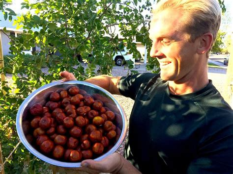 what is a of fruit trees called 25 best ideas about jujube tree on