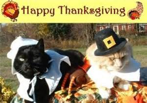 happy thanksgiving cats gallery for gt happy thanksgiving images with cats
