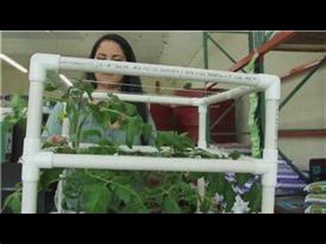 tomatoes  indoor vegetable gardens    grow