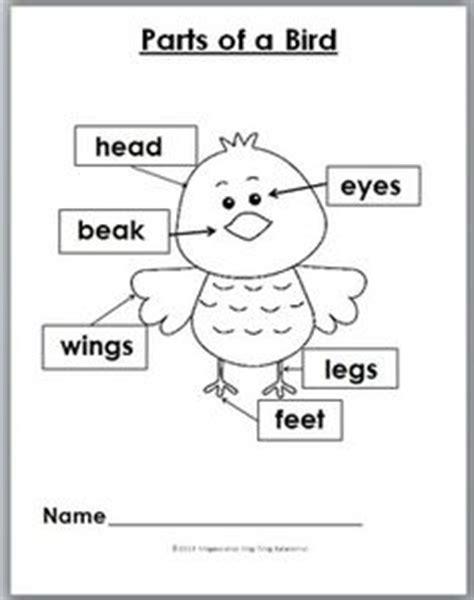 kindergarten activities birds bird identification the parts of a bird to look at to