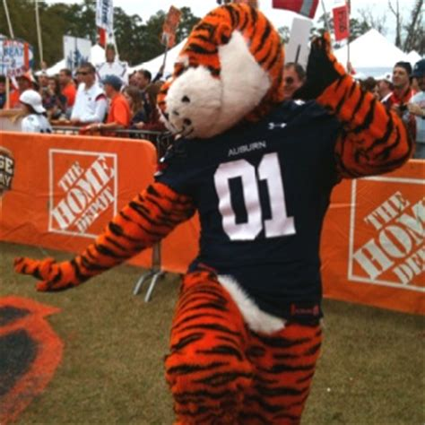 17 best images about aubie never stops on sec