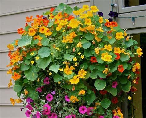 piante a cespuglio da giardino piante a cespuglio da giardino arbusti da fiore piante