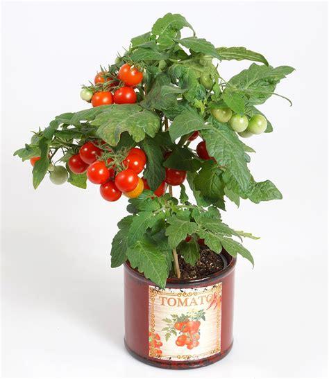 pflanzen shop pflanzen shop farn mix 3 pflanzen outdoor kaufen