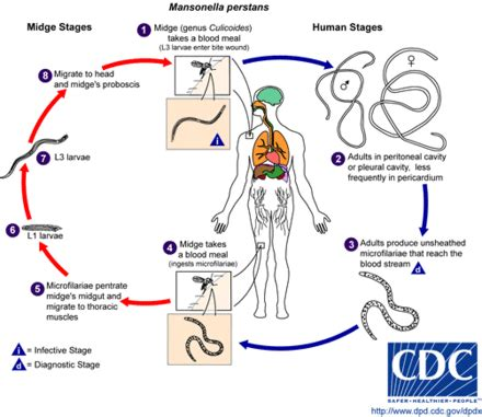 cadena epidemiologica fasciolosis icd 10 chapter i certain infectious and parasitic