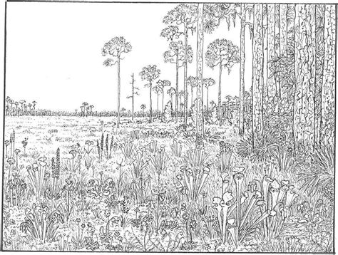 coloring pages for adults amazon flower page printable coloring sheets rainforest