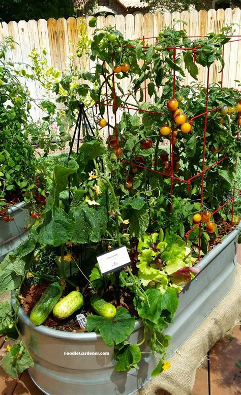 container vegetable garden on your patio gardencus