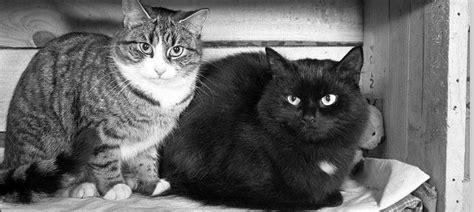 wann ist katze ausgewachsen woher wei 223 wann meine katze stirbt konrad lischka