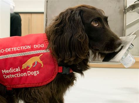 dogs detect cancer detection dogs dogs saving lives