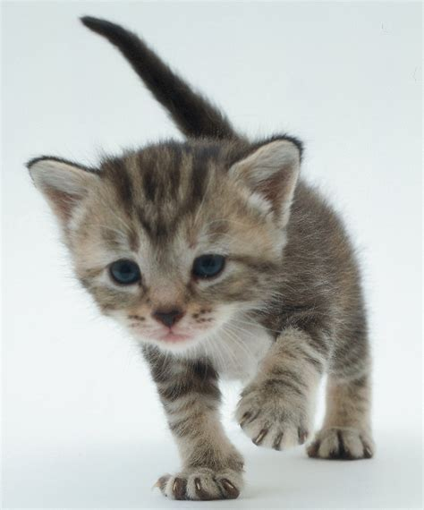 wallpaper animasi kucing bergerak ivanildosantos gambar kartun kucing