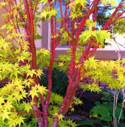 Featured hot winter plants 171 arbor enterprises inc