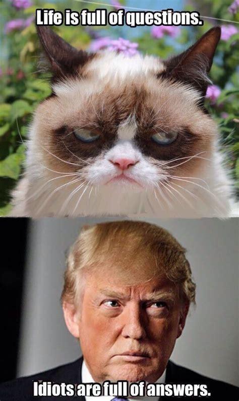 Grumpy Cat Memes Clean - 1256 best grumpy cat images on pinterest grumpy cat cats and funny kitties