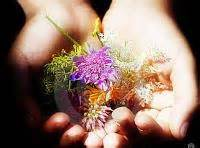 le tue piene di fiori le tue piene di fiori dove li portavi fratello