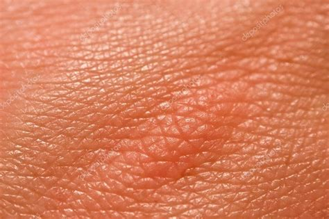 human skin texture macro stock photo 293974619 human skin macro picture stock photo 169 jugulator 25119063