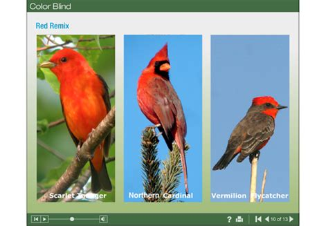 are birds color blind learn about birds from anywhere new webinar and