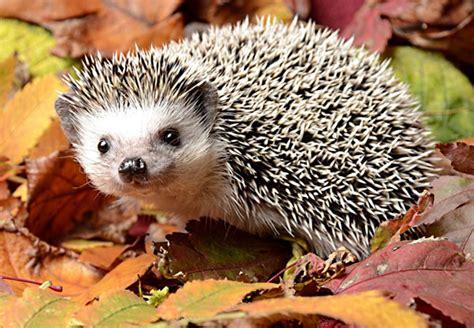 imagenes de animales omnivoros para niños fotos de animales omn 237 voros animales omn 237 voros