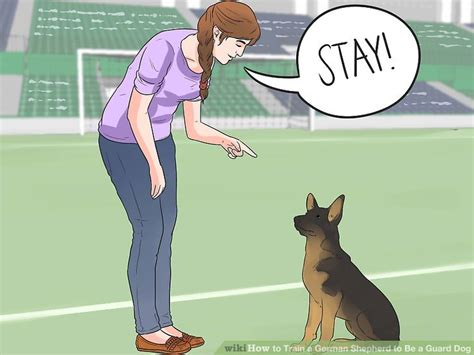 how to my to be a guard how to a german shepherd to be a guard with pictures