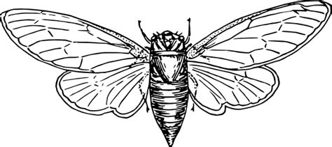 locust clip art  clkercom vector clip art