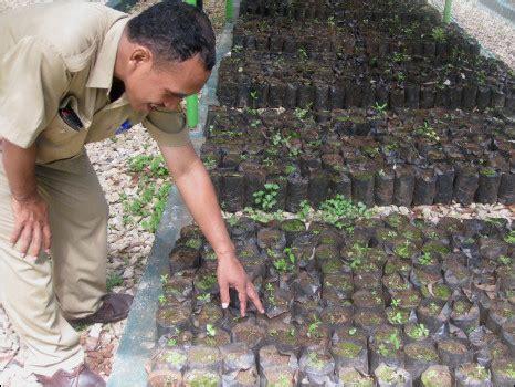 Bibit Cendana Bersertifikat indonesia multimedia memotret hutan indonesia
