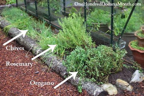 Design A Picture Online Xcombear Download Photos Textures Perennial Herb Garden Layout