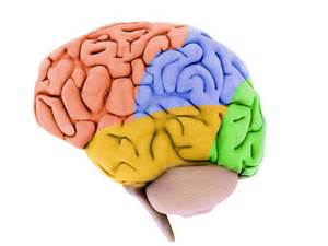 brain color 3 psychological tips to boost your business web site part
