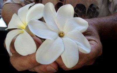 tiare fiore tiar 232 fiore di tahiti dalle fantastiche propriet 224 di bellezza