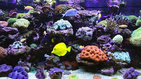 best fish screensaver perleputz aquarium screensaver