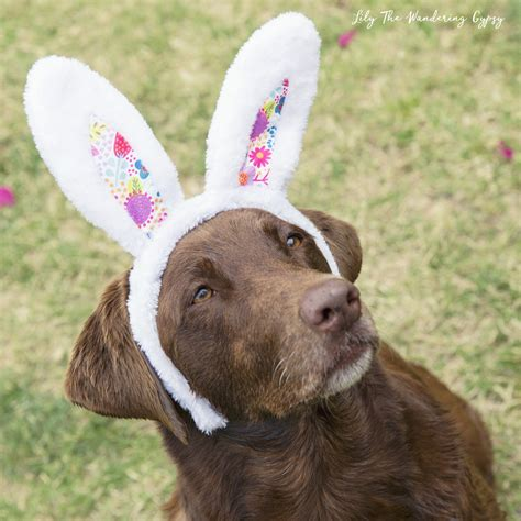 does target allow dogs a friendly easter basket and a easter egg hunt targetmademedoit the