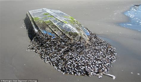 what are barnacles on a boat um novo jeito de remover as cracas que agarram nos cascos