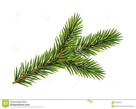 christmas fir tree branch stock vector image of branches