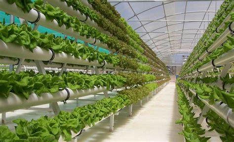 cara membuat tanaman hidroponik organik sistem tanam modern dengan menggunakan teknik hidroponik