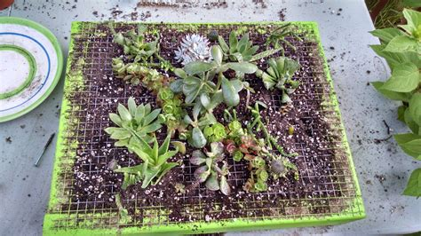 how to build a vertical succulent garden