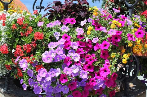 fiori per balconi fiori da balcone pieno sole con 10 fiori e piante da