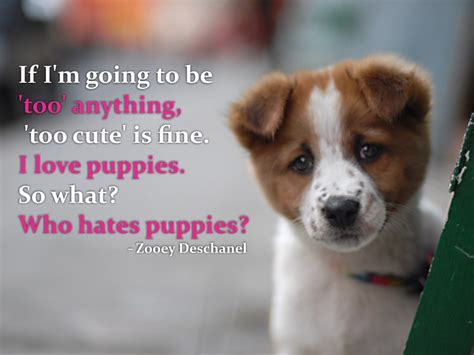 quotes about puppies puppy with quotes quotesgram
