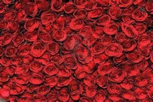 mind heart and soul bed of roses