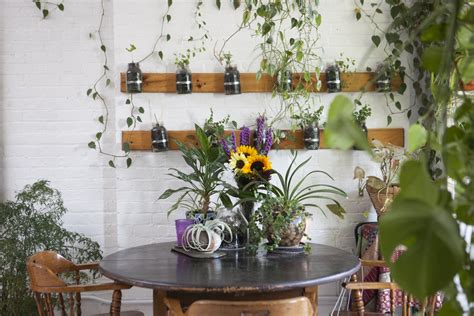 apartment plants ideas meet a woman who keeps 500 plants in her brooklyn