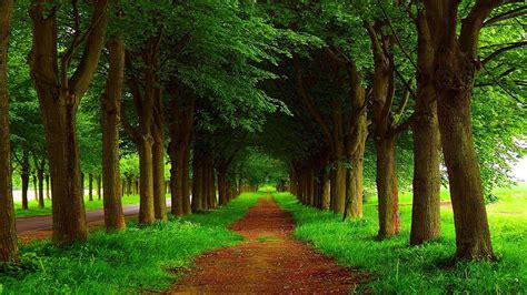 country roadside   trees hd wallpaper