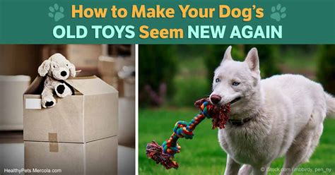 how to make dogs like you how to make your like a new dogs breed