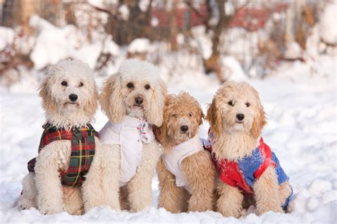 when can i take my puppy outside after vaccinations how to keep your safe during the cold winter months