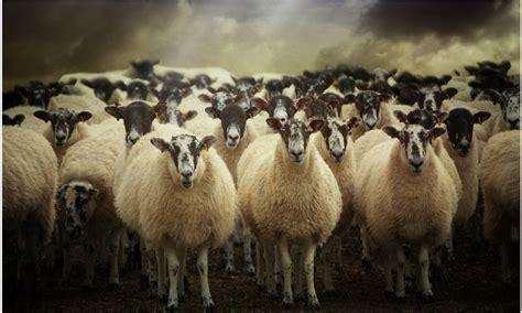 sufro de sue 241 os la manada