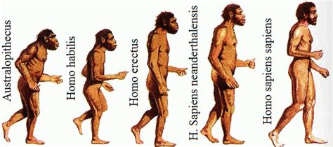 imagenes realistas de la prehistoria prehistoria