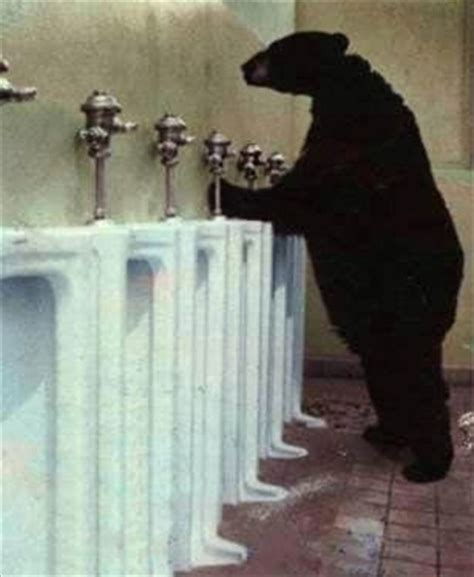bear bathroom bear in bathroom picture lots of jokes