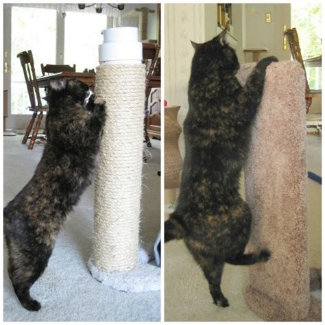 review furniture protector cat scratcher  kool kitty