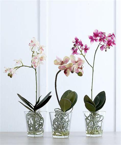 vasi per orchidee vasi di orchidee cosa dovrebbe essere orchidee in