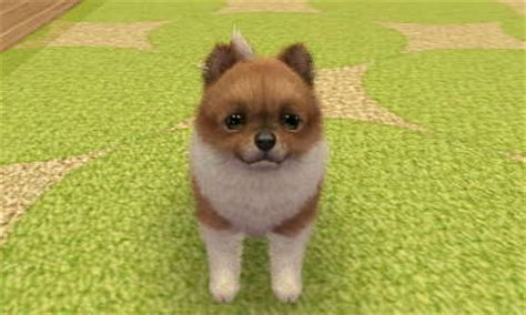 nintendogs and cats pomeranian nintendogs plus cats by cottoncandy22333 on deviantart