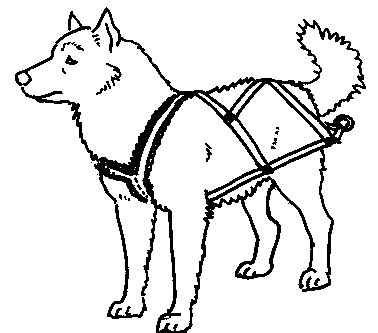 dog team coloring page husky clipart sled dog pencil and in color husky clipart
