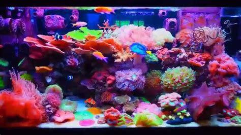 lps saltwater tank reef aquarium doovi