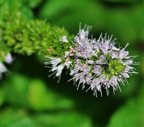 linguaggio segreto dei fiori dizionario il linguaggio segreto dei fiori linguaggio dei fiori