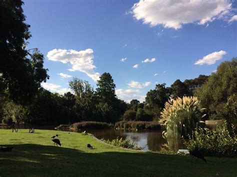 botanical gardens south yarra royal botanic gardens melbourne